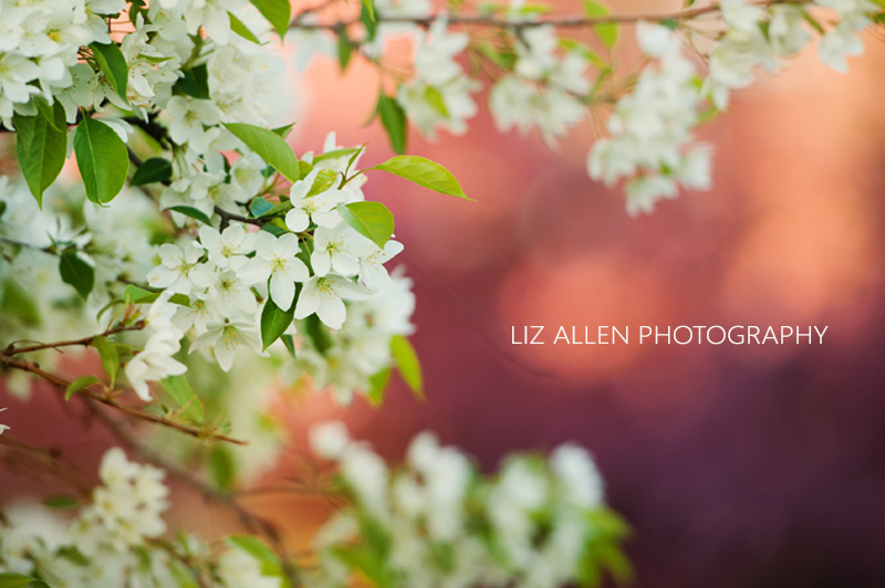 Real & Inspiring - Liz Allen Photography Flower 1